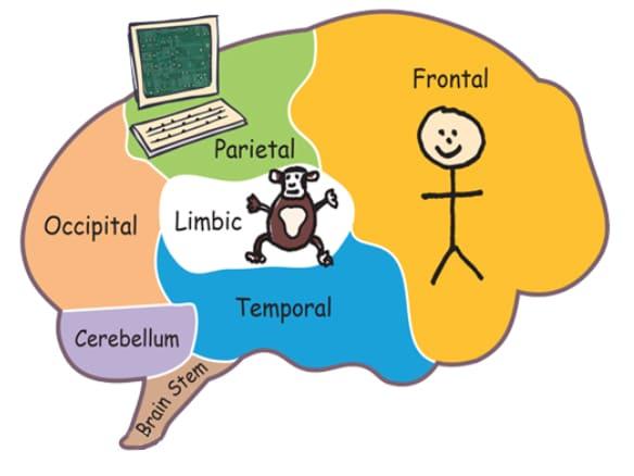 The Chimp Model brain diagram