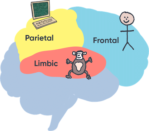 Chimp Model diagram | Parietal, Frontal, Limbic