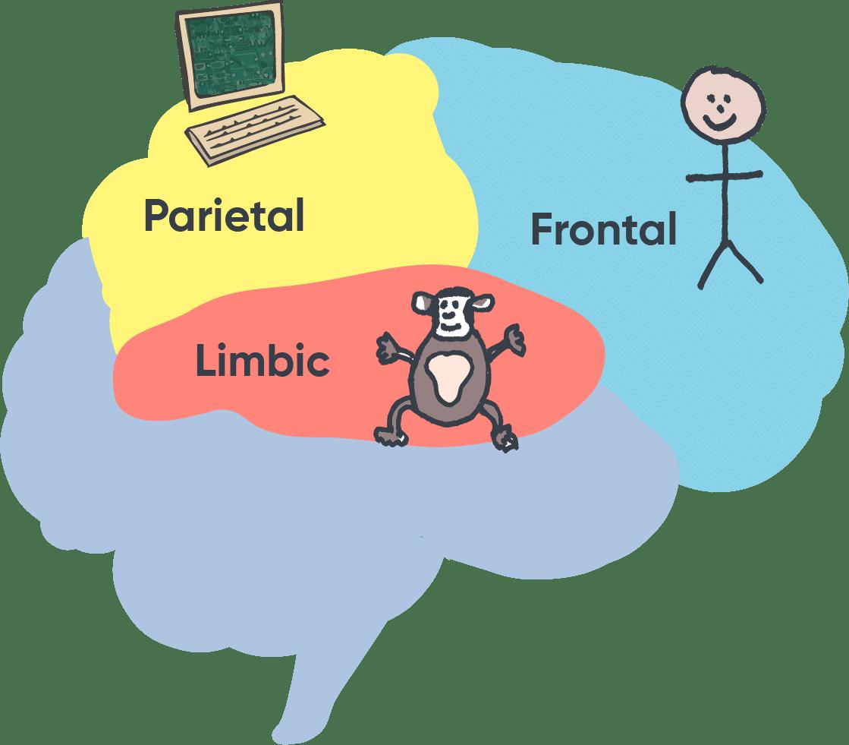 Chimp Model Diagram